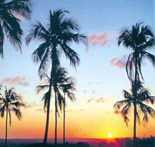 palmeiracapa.jpg