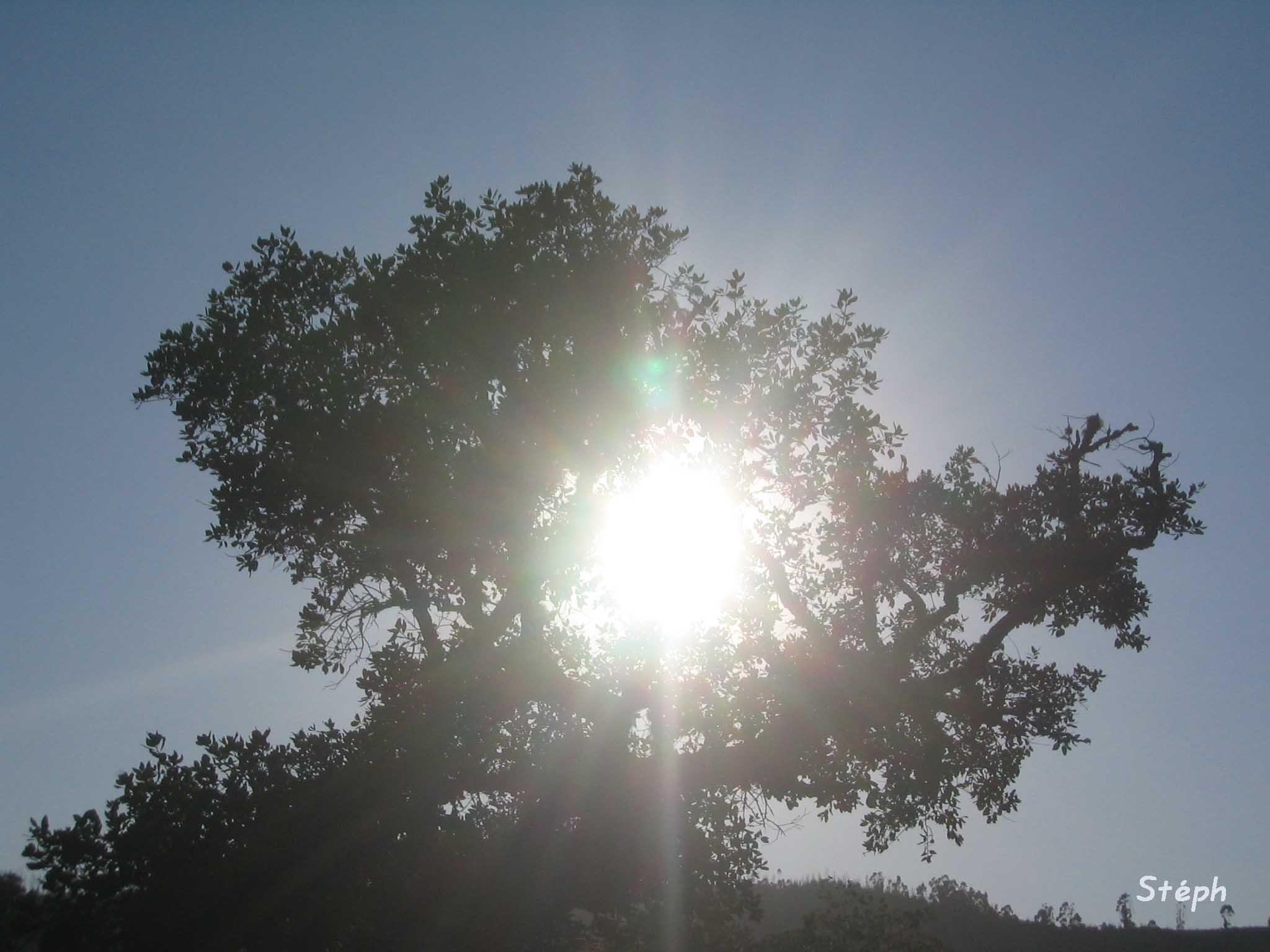 arbre2contrejour.jpg
